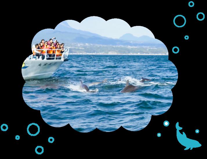 群れで泳ぐイルカをウォッチングする観光客の写真