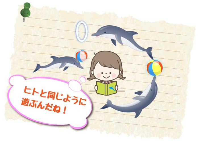 イルカの遊びの秘密
